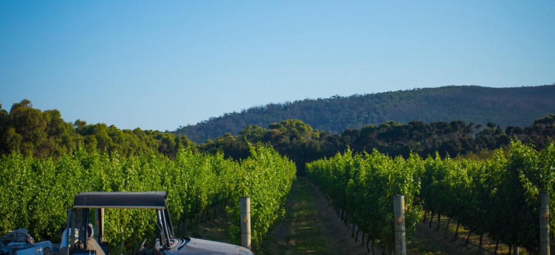 Unavale Vineyard